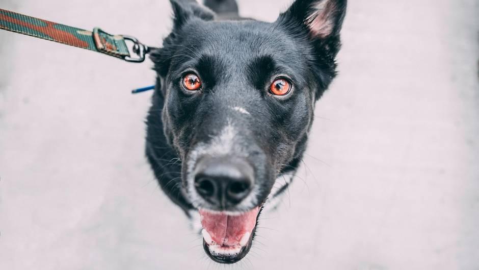 Ein Foto von einem fröhlichen Hund