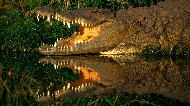 Krokodil tötet Pastor bei Seetaufe in Äthiopien