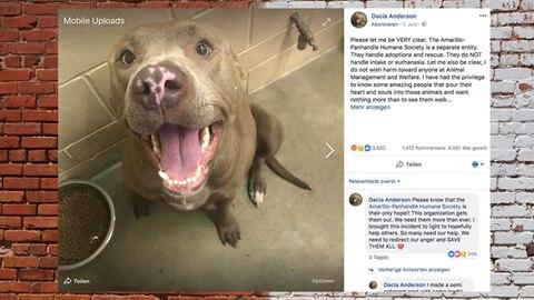 USA: Während der Geburt: Tierheim schläfert trächtigen Pitbull ein