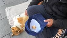 Ein Mann kauert auf einer Decke, neben ihm liegt sein Hund auf der Seite. Der Mann hält eine Schirmmütze mit Kleingeld.