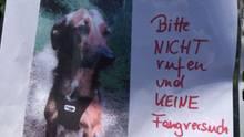 nachrichten deutschland - hund a5