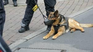 Polizeihund beißt in Darmstadt HIV-Infizierten