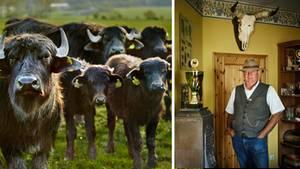 Wildnis in Thüringen: EU-Subventionen fürs Nichtstun