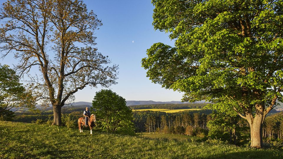 Ein Mann, ein Pferd: Heinz Bley reitet auf Ukko, einem Schweizer Freiberger, in den Morgen. Der Rest ergibt sich