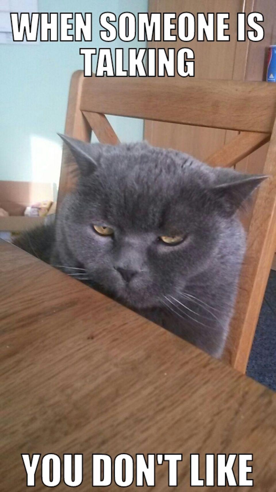 Dieses Meme hat meine Schwester mit einem Bild unserer Katze gemacht. Ja, so guckt der fast immer.