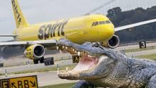Ein Airbus der US-Fluglinie Spirit Airlines Flughafen, der auf dem Flughafen Orlando in Florida für einen Alligator bremsen musste.