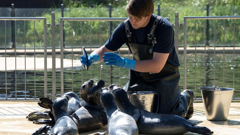 Tierpfleger mit Robben