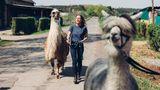 Zwei starke Charaktere: Lama Amaretto und Ärztin Monika Krout. Vorneweg latscht noch ein Alpaka – das hat aber nur eine Statistenrolle.