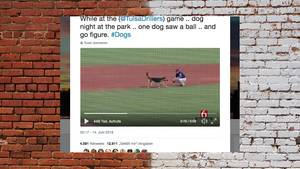 Hund rennt während des Spiels auf Baseball-Feld