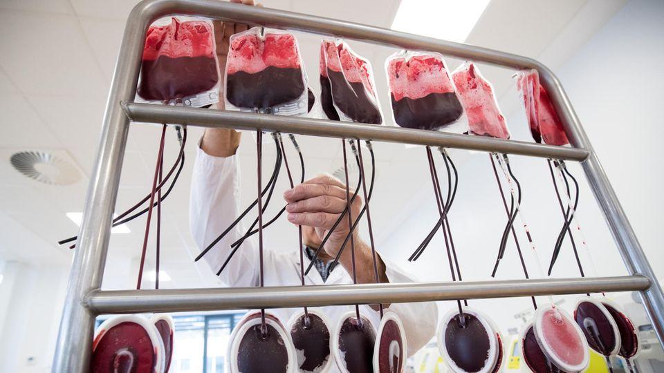 Ein Mitarbeiter hängt in der Herstellungsabteilung des DRK-Blutspendedienst Nord-Ost Beutel mit Blutspenden zur Filtration auf