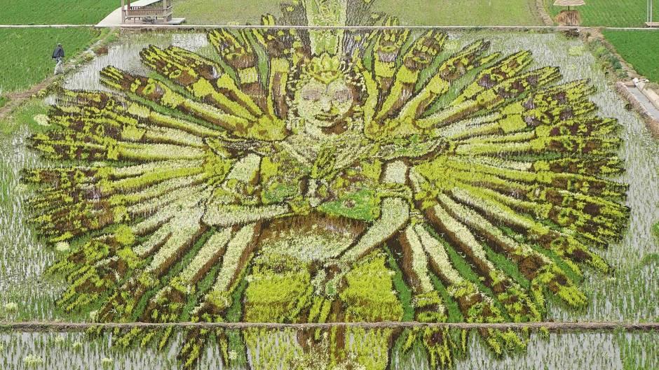 Shenyang, China. Aus unzähligen Reispflanzen wurde in der Provinz Liaoning ein Abbild Bodhisattvas, dem Wesen der Erleuchtung im Buddhismus, geschaffen.