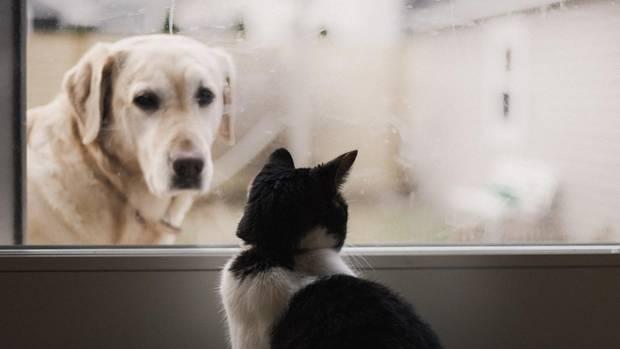 Hund und Katze an Fenster