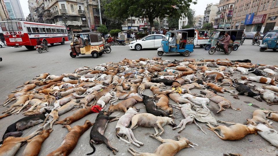 Das Bild der Nachrichtenagentur Reuters zeigt vergiftete Hunde in Pakistan und nicht in Russland