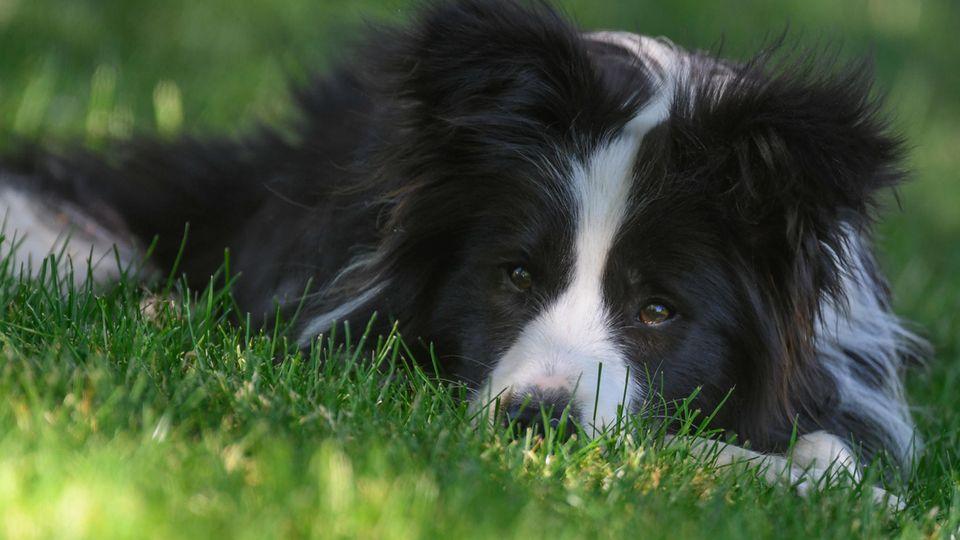 Vor dem Finanzamt sind alle Hunde gleich: Um die Hundesteuer kommen Tierbesitzer kaum herum.