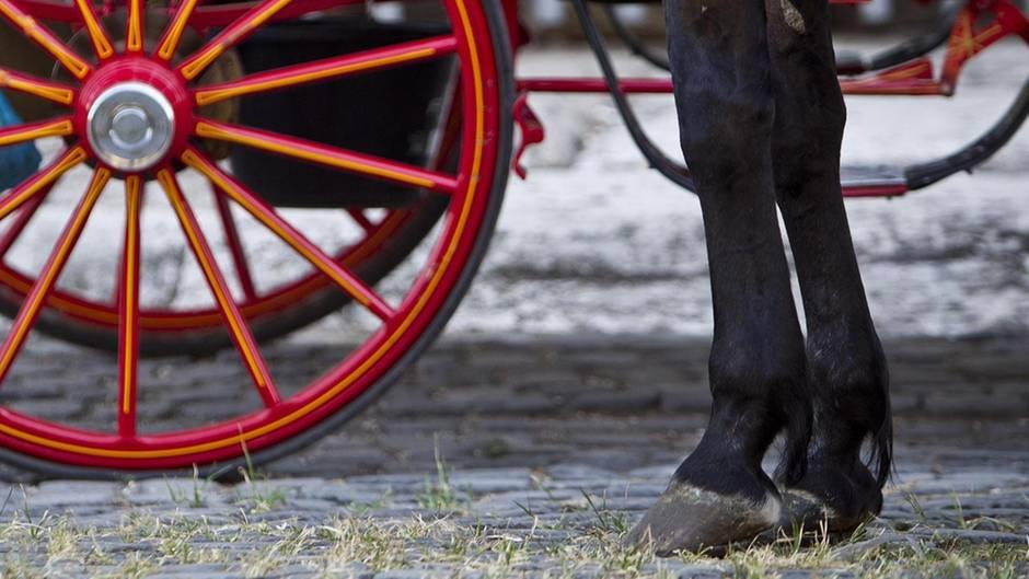 Pferdebeine vor einem Kutschrad