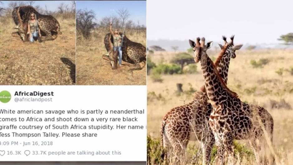 US-Amerikanerin im Shitstorm: Jagd-Touristin erschießt seltene Giraffe - die Nutzer auf Twitter sind außer sich