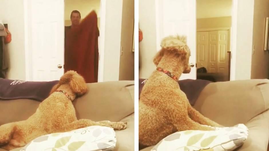 #WhatTheFluffChallenge: Neuer Handtuchtrick verwirrt Hunde – und die Videos dazu sind grandios