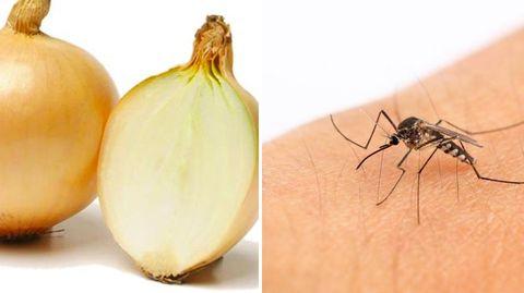 Autsch!: Das hilft bei einem Wespenstich