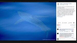 Ein Bild des Tieres nahe Cabrera postete die Organisation auf Facebook