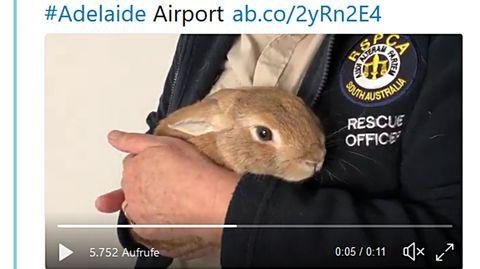 Adelaide Airport: Kaninchen löst am Flughafen Bombenalarm aus