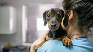 Hundehospiz: Englische Krankenschwester gründet Sterbeheim für Hunde