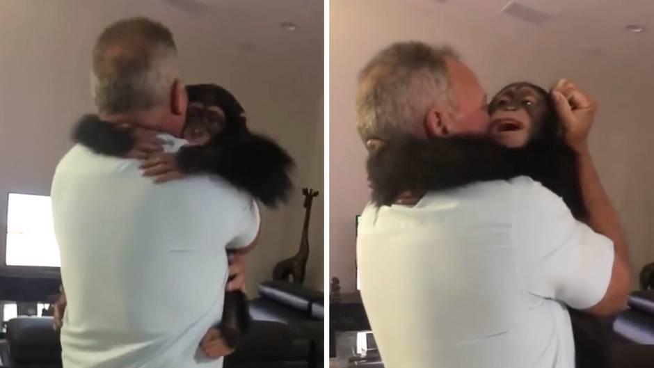Zoo in Miami: So goldig reagiert der kleine Schimpanse Limbani auf das Wiedersehen mit seinen Pflegern