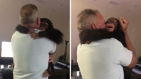 Rührendes Video: Tierschützerin und Schimpansen feiern Wiedersehen – nach 18 Jahren