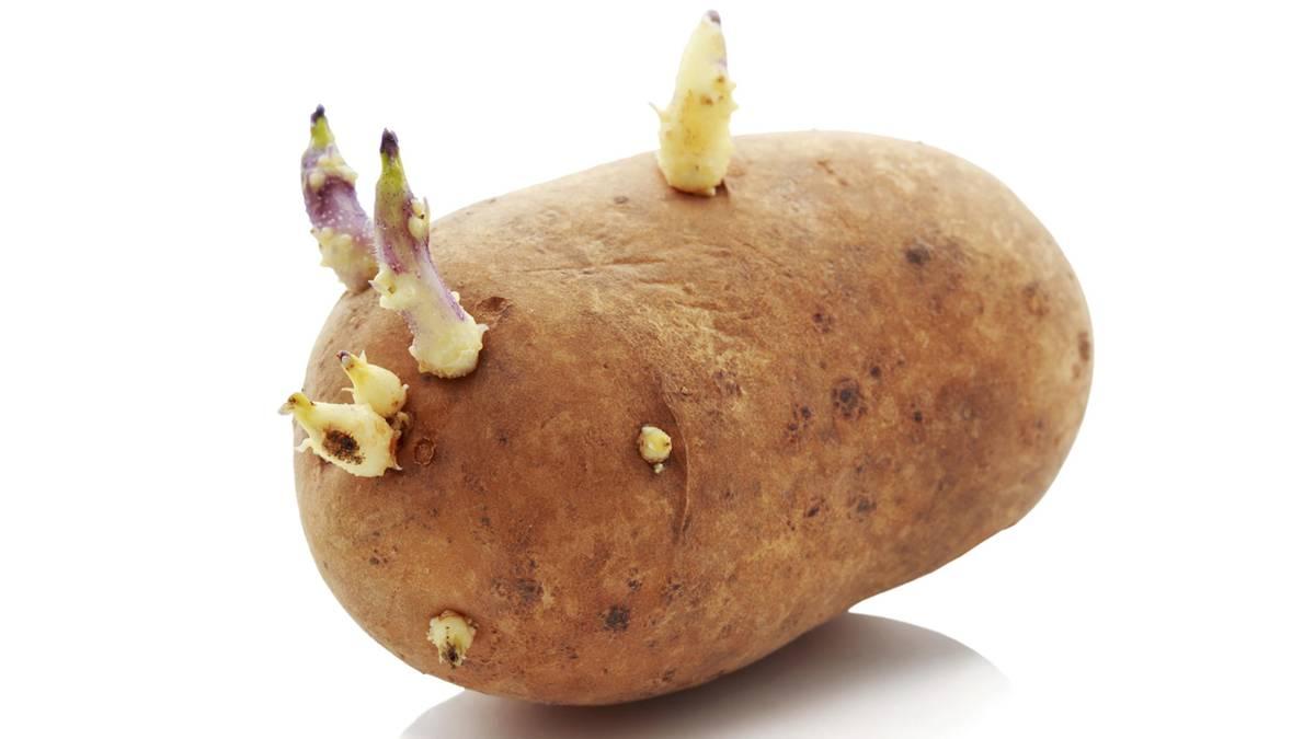 Keimende Kartoffel Essen