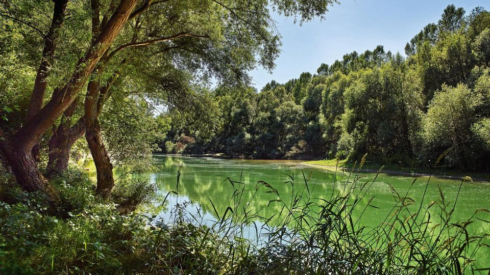 Abgelegene Altrheinarme mit Auwäldern sind Lebensraum für Insekten und Singvögel – wie hier südlich von Karlsruhe
