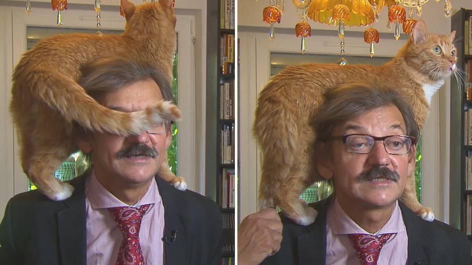 Kleine Rampensau: Während TV-Interview: Katze stiehlt ihrem Herrchen die Show