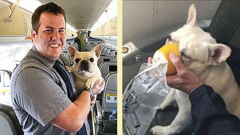 Darcy und sein Lebensretter, der Flugbegleiter Renaud Fenster. Im Foto daneben beweist Darcy, wie professionell sie durch eine Sauerstoffmaske atmen kann.