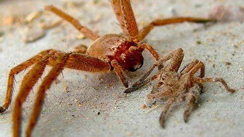 Zwei Spinnen auf einem sandigen Untergrund