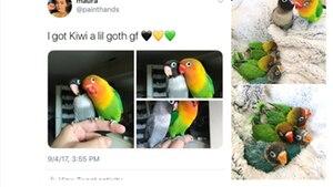 Ein bunter Vogel und seine schwarze Vogelfreundin sitzen auf dem Finger ihrer Besitzerin