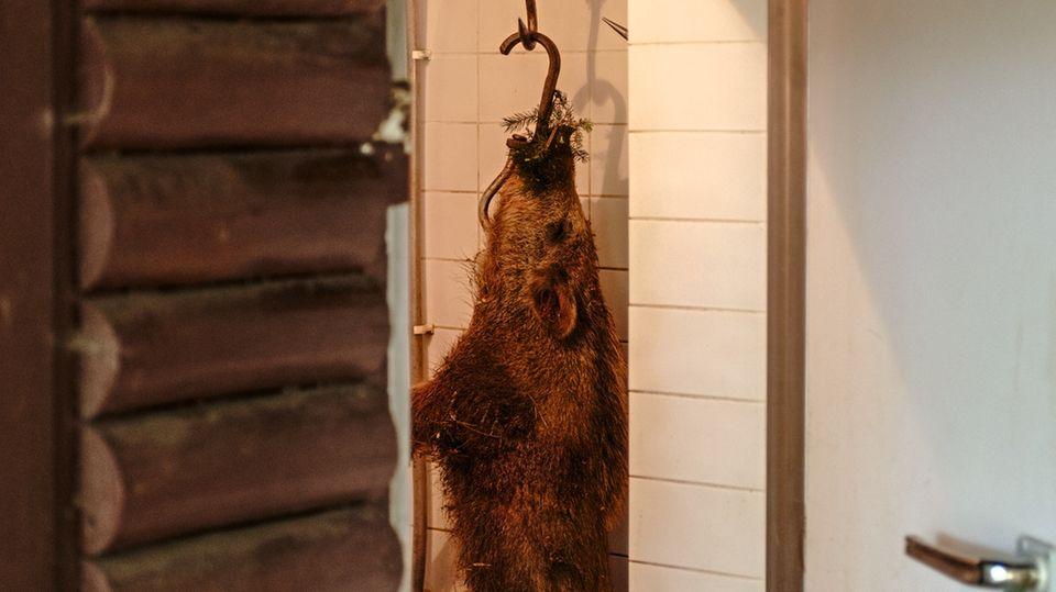 Erlegte Wildschweine landen erst in der Kühlkammer, später auf dem Grill