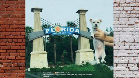 Malteser Benny in Florida