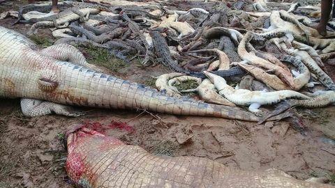 Die Dorfbewohner brachten Medienberichten zufolge fast 300 Tiere um