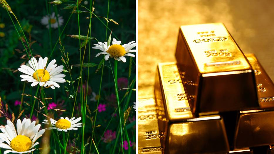So gewonnen, so zerronnen: Stellen Sie sich vor, Sie finden 28 Goldbarren im Garten – und müssen sie wieder abgeben