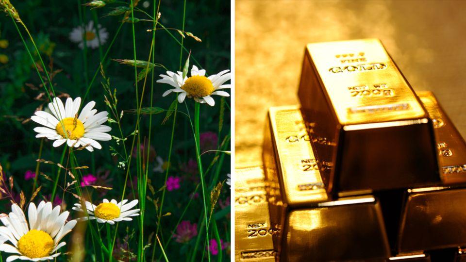 Preisverfall: Verschmähtes Edelmetall: Warum derzeit kaum jemand Gold kaufen will