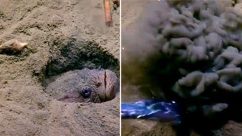 Gefährliche Fischerei-Methoden: Schleppnetze bedrohen das Leben in der Tiefsee