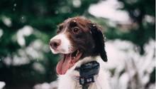 Gestohlener Hund Scampi