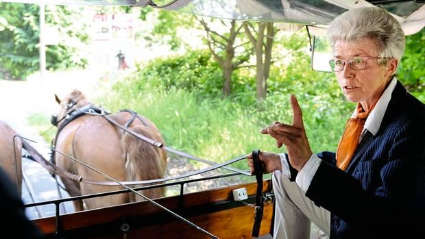 Seit 42 Jahren fährt Brigitte Will Gäste durch Heringsdorf und das Usedomer Hügelland. Die Mecklenburger Kaltblüter Eros und Vagabund ziehen die Kutsche