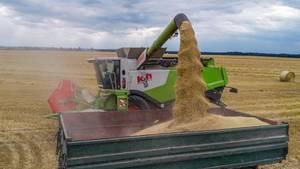 News: Der 19-Jährigegeriet bei der Ernte unter einen Haufen Getreide (Symbolbild)