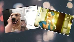 Hund Riley und Britney Spears