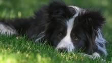 Hitze - Deutschland - Haustiere - Tipps