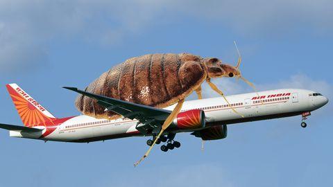 Unangenehme Mitreisende in der Business Class an Bord von Air India: Bettwanzen