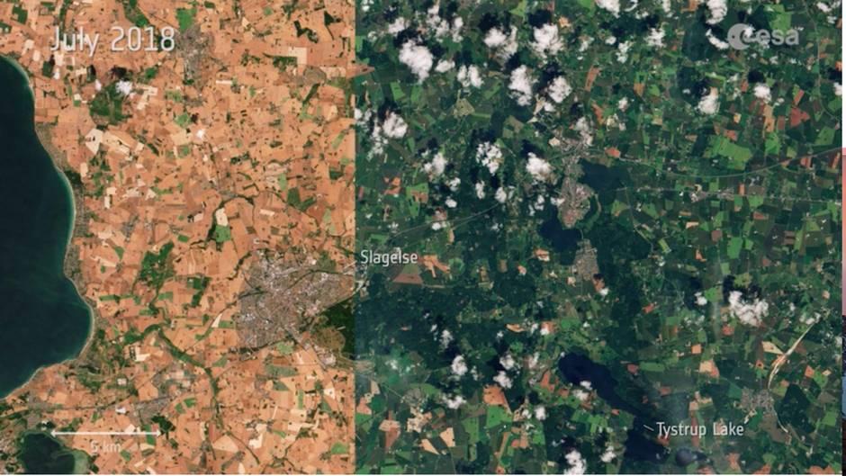 Hitzewelle 2018: Satellitenbilder zeigen: So gravierend sind die Auswirkungen auf die Vegetation