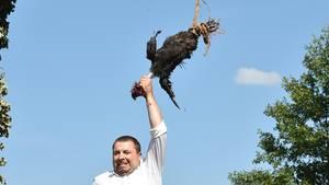 Hahnenrupfen: Sorbische Tradition spaltet Tierschützer und Bewohner