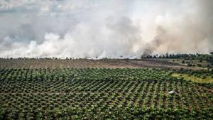 Im indonesischen Dumai brennt das Gelände neben einer Palmöl-Plantage. Durch die Rodungwird es als Anbaufläche vorbereitet.