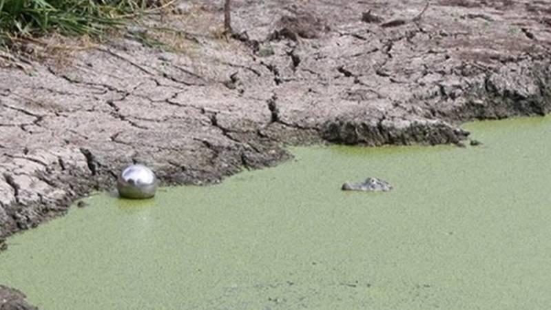 Wildtier-Alarm in NRW: Frau will Krokodil in Baggersee entdeckt haben - Blamage programmiert