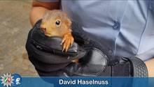 Ein Eichhörnchen in der Hand einer Polizistin